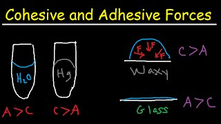 Cohesive and Adhesive Forces of Water