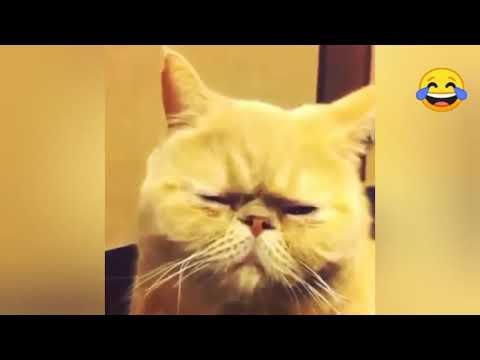 Грустный кот!