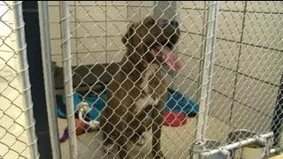 Deadly dog to be euthanized