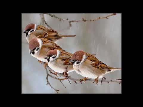 His Eye Is On The Sparrow   DENIECE WILLIAMS