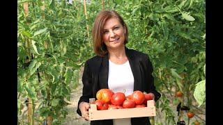 Safranbolu Belediyesi Tarımda İlk Hasadını Yaptı