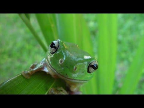 Online Frog Theatre