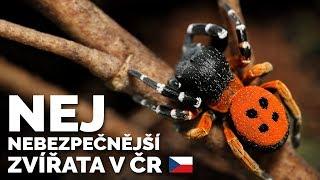 TOP 5 NEJJEDOVATĚJŠÍ ZVÍŘATA V ČR