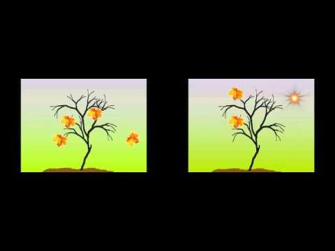 Картинки для восстановления зрения при дальнозоркости