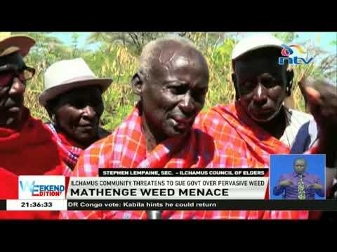 Ilchamus community threatens to sue government over pervasive weed