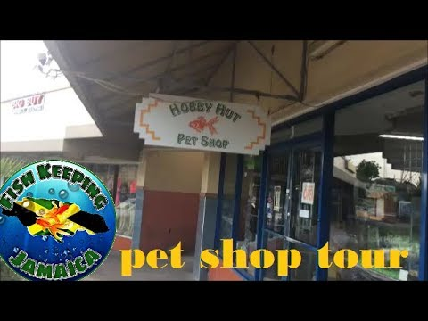 Jamaican pet shop tour: Hobby Hut Pet Shop