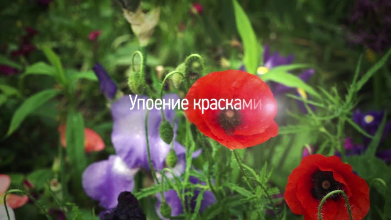 #АртЛекторийВкино: Сады в живописи - от Моне до Матисса