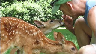 Ep. 17: Elly's Orphaned Triplet Fawns-August 2018