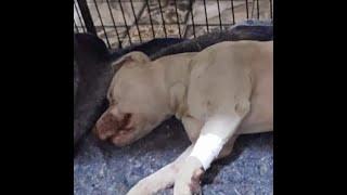 Sancionada lei que aumenta punição para maus-tratos de animais.