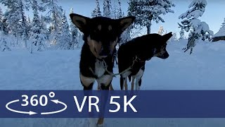 Dog Sledding trough beautiful winter scenery in North Sweden in 360 VR