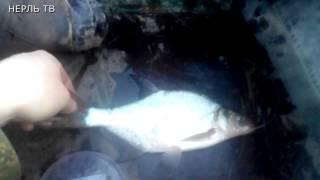 Рыбалка в ивановской области на реке нерль