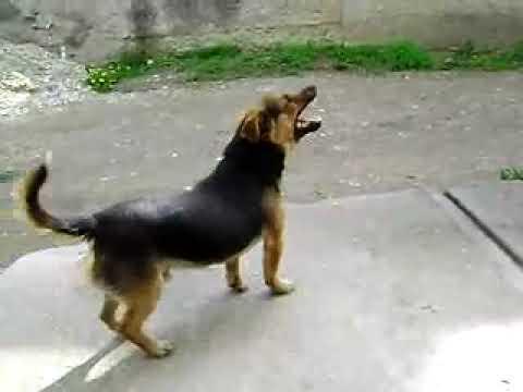לכלב הקטן והחמוד הזה יש את העיטוש הכי מצחיק ששמענו!