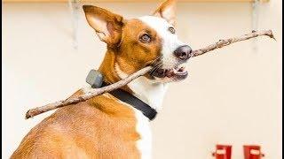 7 Things Your Dog Wants On Amazon