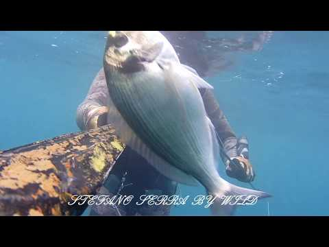 La pesca in cercatori di profondità sonici nellinverno