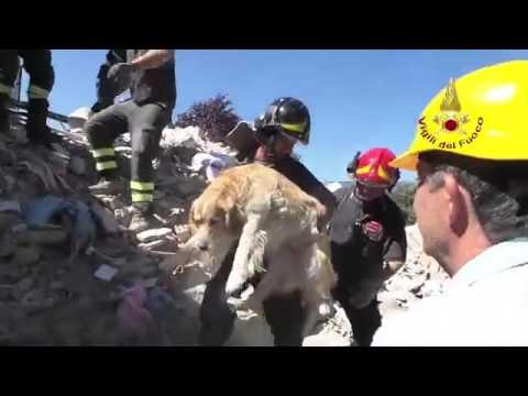 Anteprima Video Golden Retriever ritrovato sotto le macerie 9 giorni dopo il terremoto ad Amatrice