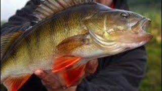 Рыбалка в пермском крае на гэс