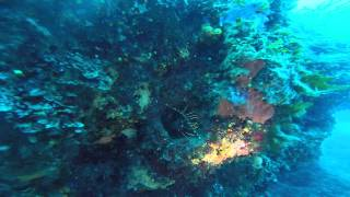 preview picture of video 'Immersione a Isola delle Femmine 5 ARAGOSTE 5/07/2014'