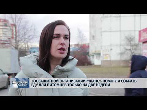 Новости Псков 18.02.2020 / Зоозащитной организации «Шанс» помогли собрать еду для питомцев только на две недели