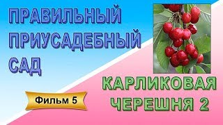 Правильный приусадебный сад Фильм 5 Карликовая черешня 2