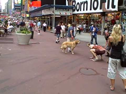 Giant Rat Meets Dog In Times Square NYC