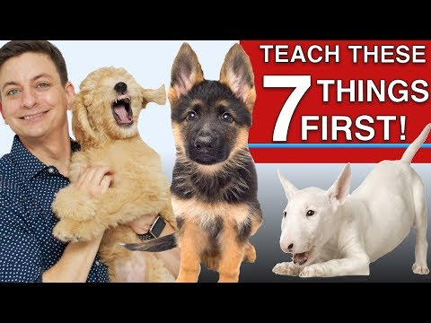 How to Teach The First 7 Things To Your Dog: Sit, Leave it, Come, Leash walking, Name...)