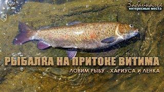 Интересные места Забайкалья. Рыбалка на реке, притоке Витима. Ловим рыбу - хариуса и ленка