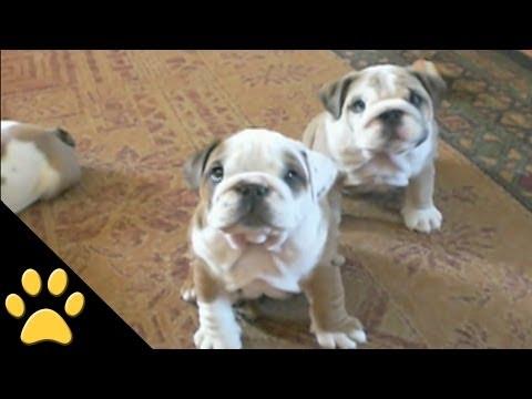 Xem xong video này có bạn nào nghĩ những con chó những những đứa trẻ không bao giờ lớn không