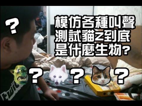 【統神 模仿各種叫聲嚇貓z 到底是什麼生物?  2017/01/22