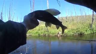 Трудовой день рыбалки на хариуса в Сибири. Готовим Овощное рагу по Сибирски!!! День второй!