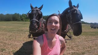DRAFT HORSES: Making Hay While The Sun Shines