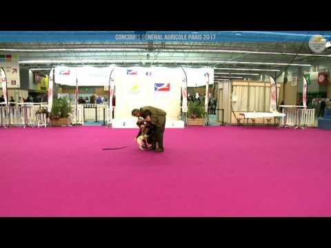 Voir la vidéo : Ring Canins du 05 mars 2017, partie 1