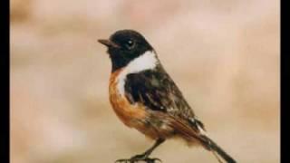 Uccelli di campagna e zone collinari  (versi) 1 di 2