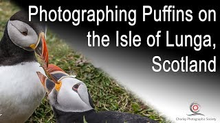 Photographing Puffins on Lunga, Scotland