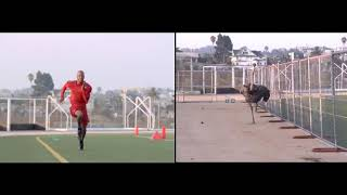 Athlete vs Ostrich   Awesome Mechanism