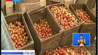 Wingi wa tomato bila soko Laikipia Magharibi