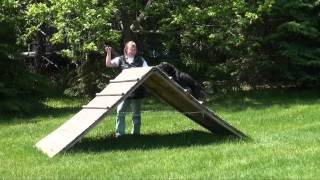 Rally - Dog Obedience Training Video