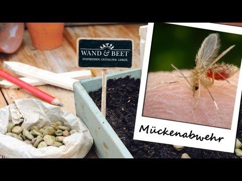 Tipps zur Mückenabwehr