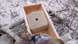Поймать косулю в капкан на солонцах