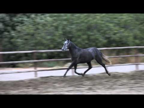 Habichuela DM - Octubre 2012