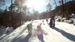 preview picture of video 'Scharnitz Schlittenhunde WM'