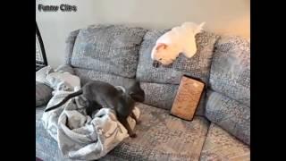 funny cat being jerk