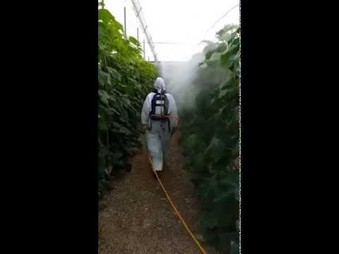 Como sanar el hongo por el láser