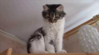 Cute animals. Счастье кошки Кляксы.