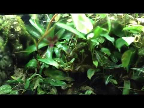 To Waterfall or NOT To Waterfall (poison dart frog)