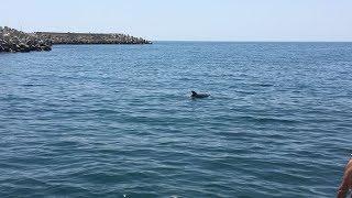 Дельфины в Геленджике 7 июня 2018 г.