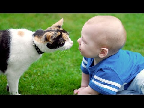 Cats And Dogs Meeting Babies For The First Time (2017)