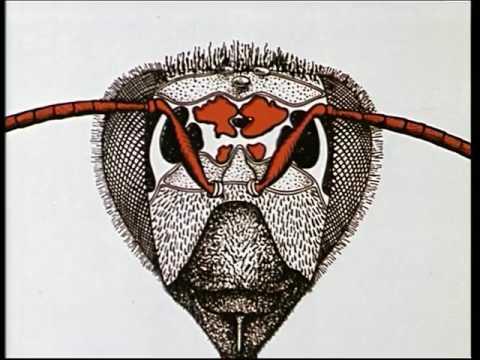 Flebologitscheskaja die Klinik moskwe