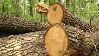 16 працівників лісової охорони звільнили на Харківщині з початку року