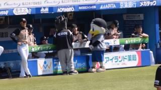日ハム・西川選手、大谷選手、矢野選手にからむズーちゃん2015 10 4