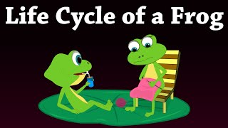 Life Cycle Of A Frog | #aumsum #kids #science #education #children
